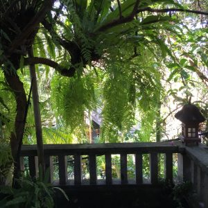 The Best B& B in Ubud: Jawi House & Painter