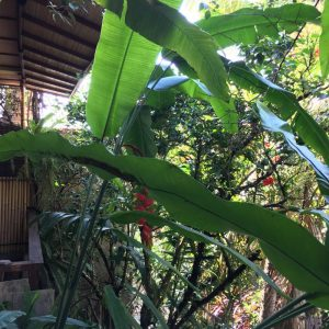 Quiet B&B in the Heart of Ubud: Jawi House & Painter