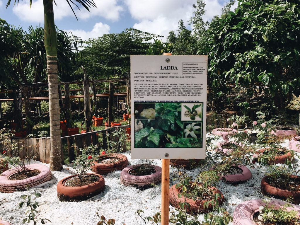 Plant medicine Guam tour