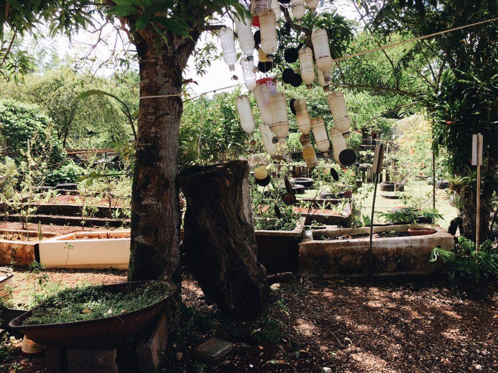 Guam herbal farm